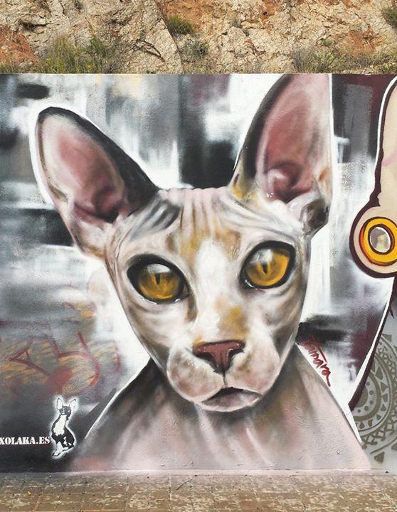 Cat sphynx.
